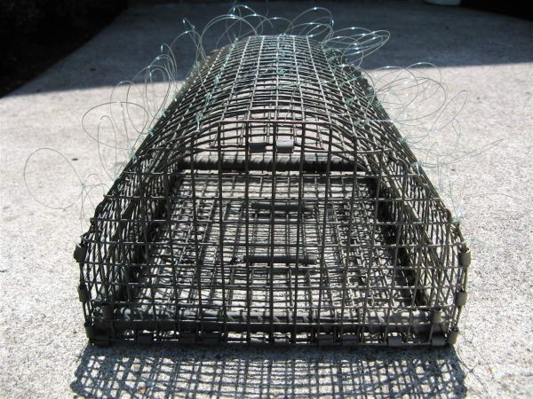 Bal-Chatri Noose trap for Red tail & Harris hawk size birds