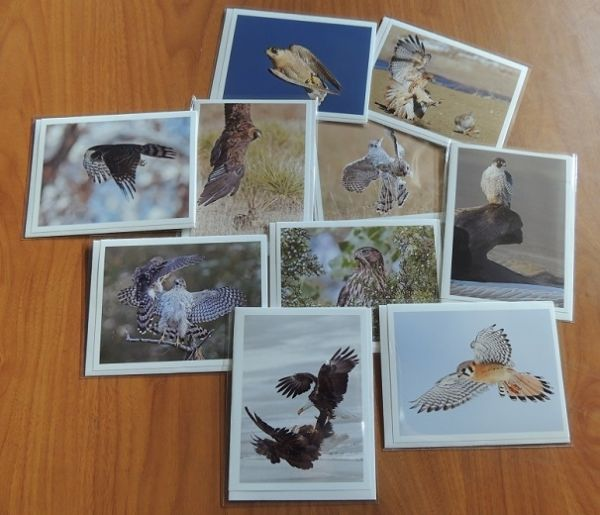 A - RAPTOR NOTE CARDS