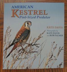 American Kestrel - Pint-sized Predator